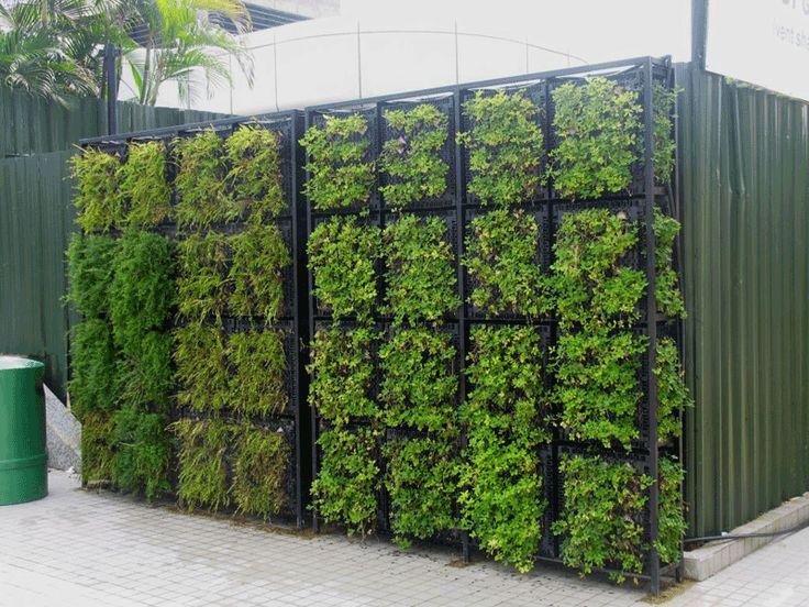 Green walls google search green walls pinterest for Living walls vertical gardens