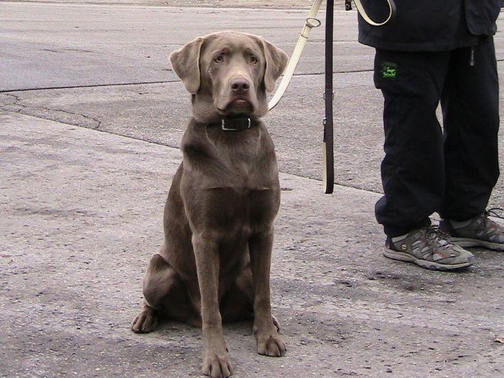 #Berlin - Stadt will Geld von ehrenamtlichen #Rettungshunde-Trainern. #DeutschesRotesKreuz Hier geht's zum Beitrag: http://www.retter.tv/de/drk.html?ereig=-Berlin-Stadt-will-Geld-von-ehrenamtlichen-Rettungshunde-Trainern-&ereignis=29785