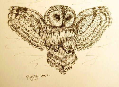 97 Owl Flying Drawing Flying Owl Drawing Tumblr Owls Owl Tattoos