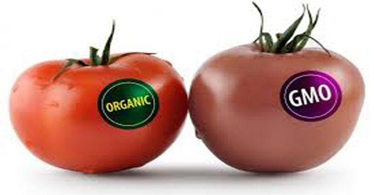 5 Основательных Причин, чтобы перестать есть ГМО! Смотреть всем!