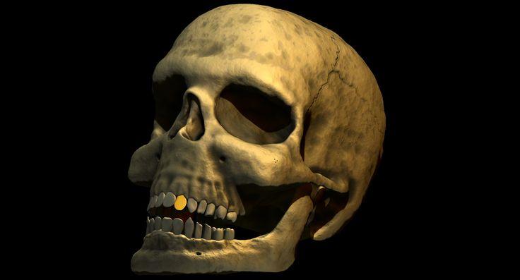 Human skull, David Arévalo on ArtStation at…