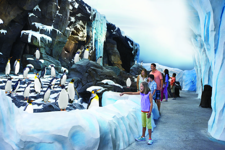 Waddle through the icy South Pole and feel what it's like to be a penguin in Antarctica: Empire of the Penguin.