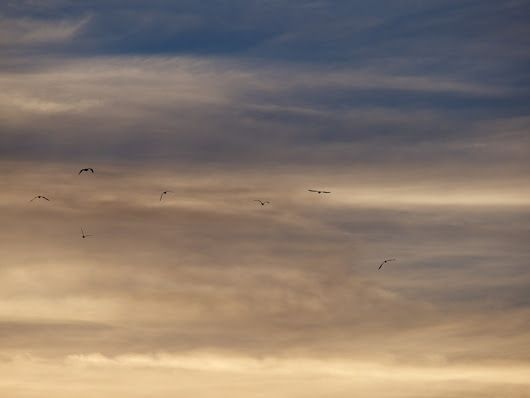 Birds in sky at Hawke's Bay, New Zealand