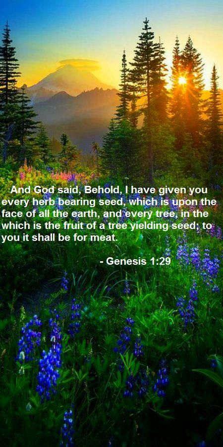 Genesis 1:29 KJV In the first chapter of Genesis we're told about all of God's creations. Earth, the Heavens, man, animals and so on. Towards the end of the chapter is this verse, explaining that we were created herbivorous. Animals were not created to be eaten. Yes, our bodies can process meat, but it is not ideal. If you do the research, you'll find that the human body was created to process and thrive on plant matter, unlike carnivores and true omnivores.