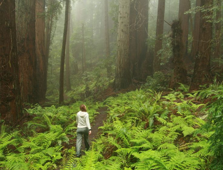5-mile (round-trip) hike in Butano State Park on the San Mateo Coast. The Mill Ox Loop has you walking through forests thick with redwood trees, hiking up to panoramic blue ocean views, and seeing green among its lush fern groves. This is a moderate hike with diverse beauty.