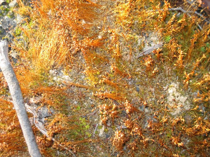 Detail of orange moss that carpeted the bush after the fires.