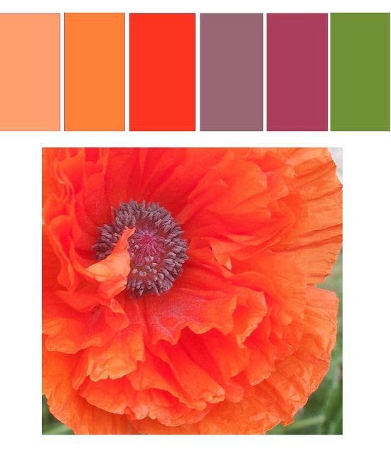 Nature offers up some great colors. This week's color palette is inspired by the first poppy bloom of the season. Have a great week and remember to tag your photos for this week with CPAW20.