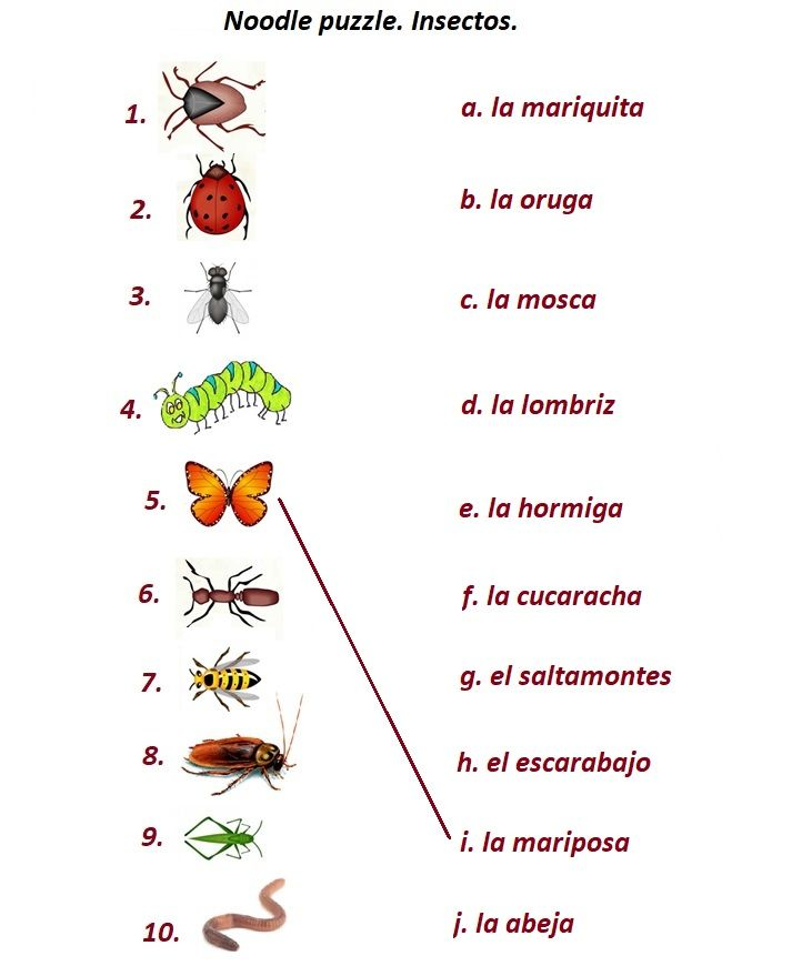 Insectos Insects In Spanish 16 Pages Free Worksheet Crossword Word Search Noodle Puzzle And Other W Learn Spanish Free Learning Spanish Teaching Spanish