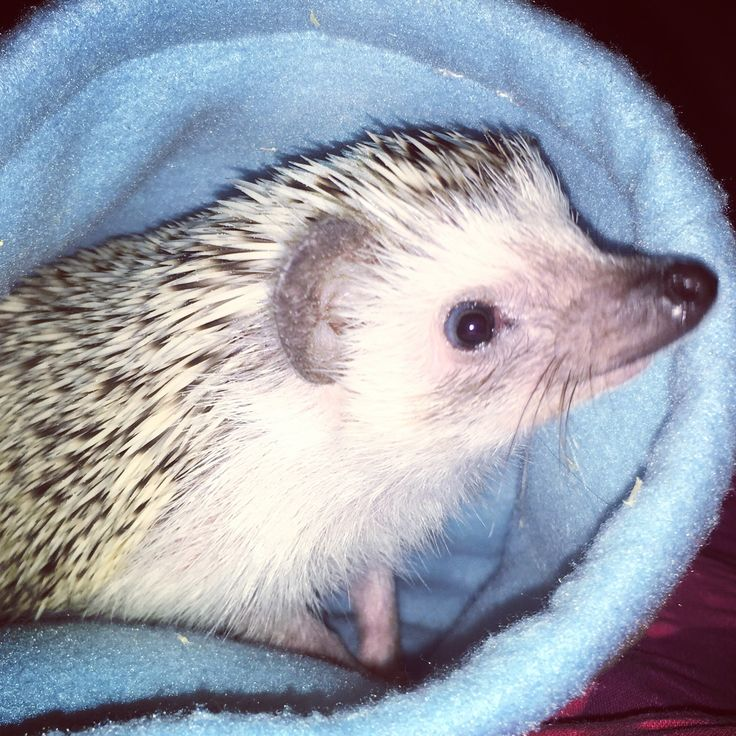 Úsměv prosím :) Smile please :) Hedgehog :)