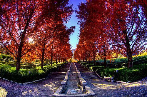 autumn tree rainbow effect