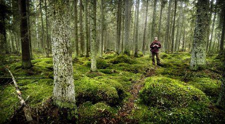 Peikkometsä. Trollforest. (Laitila, Finland)