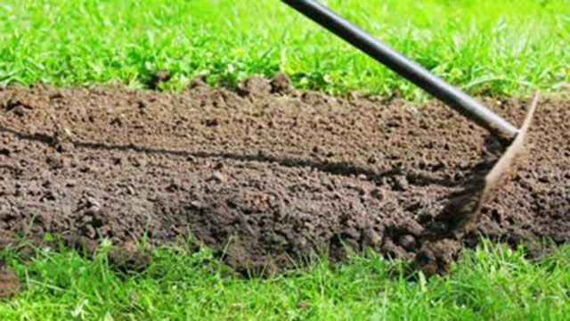 Consigli e tecniche per coltivare e curare un prato verde in giardino