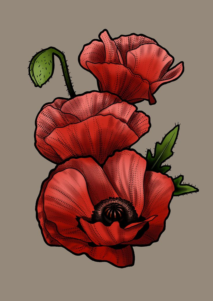 #poppy #drawing #art #tattoo #design