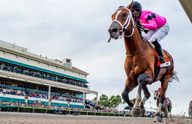 Maximum Security locks down Florida Derby 2019 win - Horse