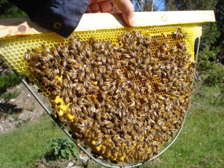 TBH wire frames 003 Bee hive plans, Buzz bee, Bee keeping