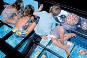 Glass Bottom Boat | Samabe Bali Resort & Villas | Nusa Dua - Bali, Indonesia