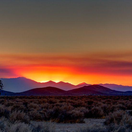 Mojave Desert Native Plants: 17+ Ideas About Desert Sunset On Pinterest