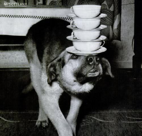 Weird Wonderful 13 Vintage Dog Weird Animals Animal Photo