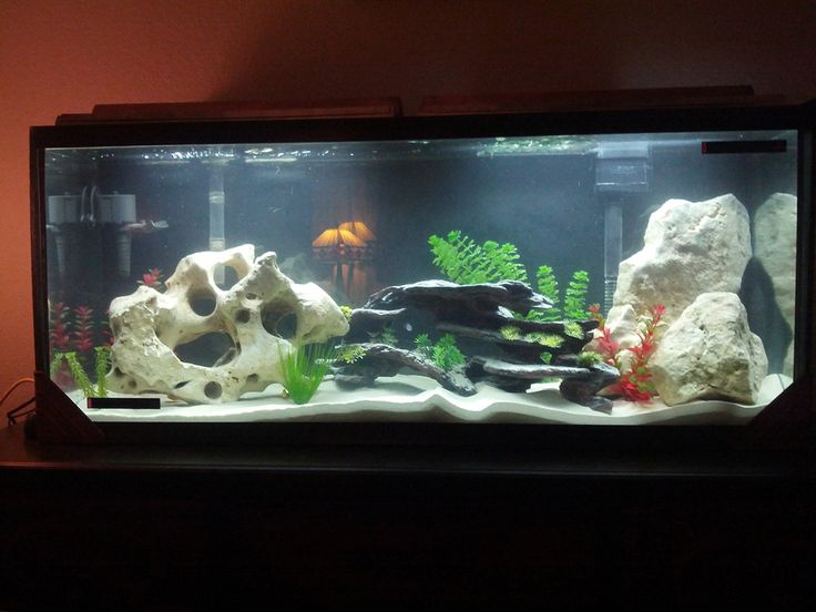 Awesome Fish Tank Decoration Ideas ~ http://www.lookmyhomes.com/amazing-fish-tank-decoration/