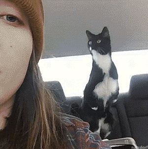 Backseat driver!! Look at her paws & her expression!
