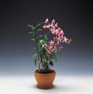 17 Best Images About Orchid Pots On Pinterest Floral
