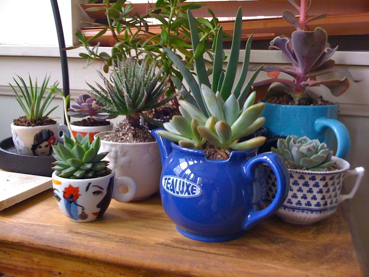I'm kind of obsessed with these tea cup succulent gardens. A project I'll have to tackle soon.