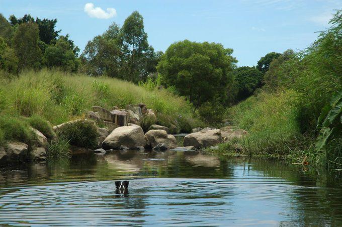 10 Best Dog Parks Around Brisbane | Must do Brisbane