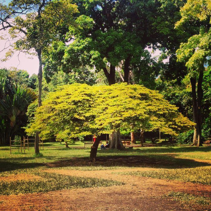 Jardín botánico, Medellín