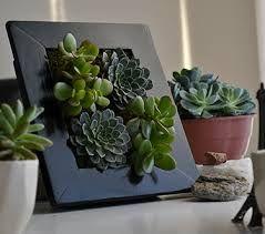 Resultado de imagen para cuadro vivo plantas