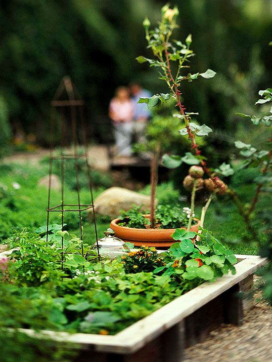 604 best grow your own produce images on pinterest for Grow your own vegetable garden