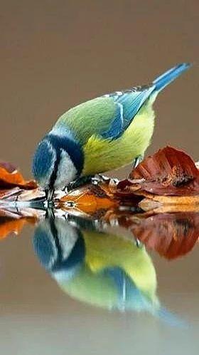Foto - Vintage antique bird collectibles at www.rubylane.com @rubylanecom #vintagebeginshere