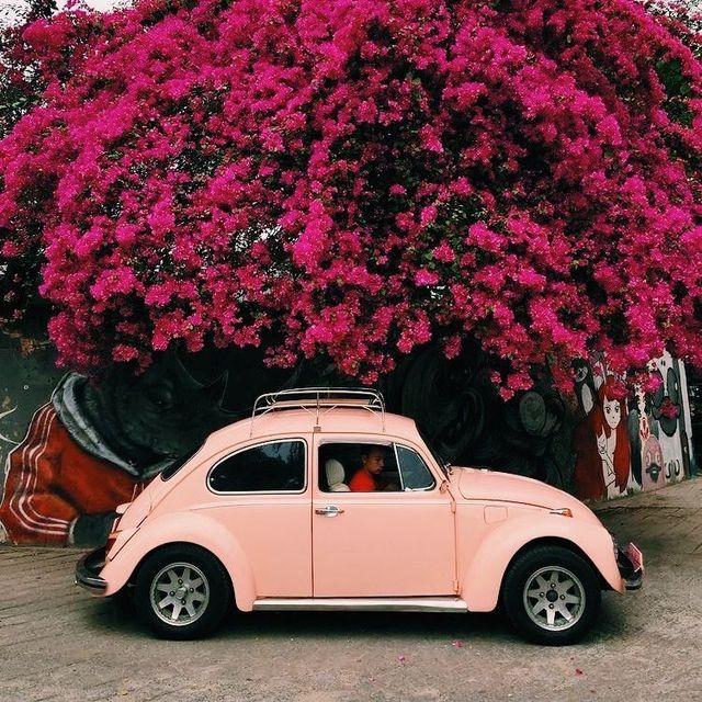 Машина цветов картинки красивые