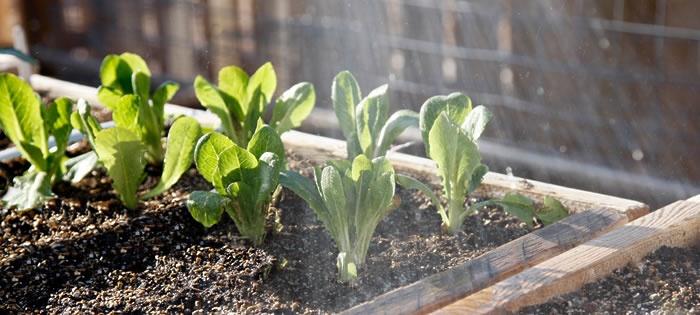 tips for a beginner gardener on starting a vegetable garden