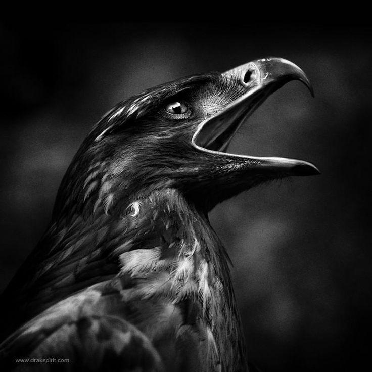 Royal by DrakSpirit #Photography #Animals