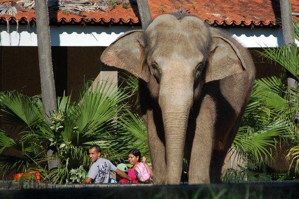 Zoologico de Río - lugares turísticos en Rio de Janeiro perfectos para ir con niños