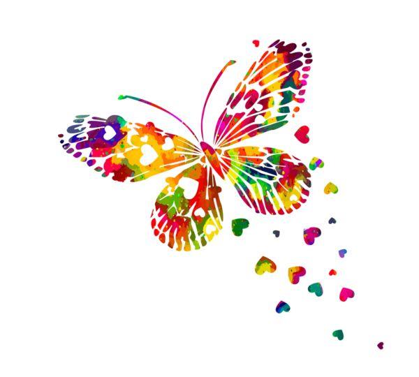 Butterflies#бабочка#бабочки