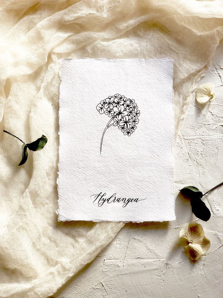 Botanical illustration art print. Modern florals. The Hydrangea- flower of gratitude