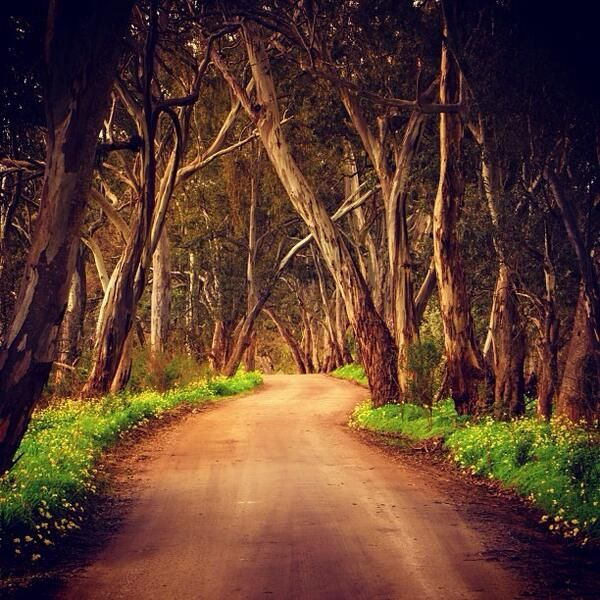 Clare valley Australia | http://www.viewretreats.com/barossa-clare-valley-luxury-accommodation