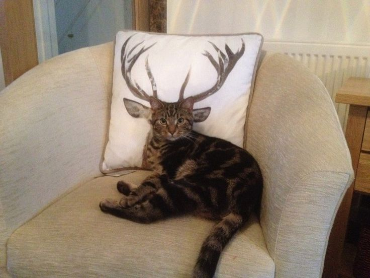How deer you disturb the cat? - Imgur