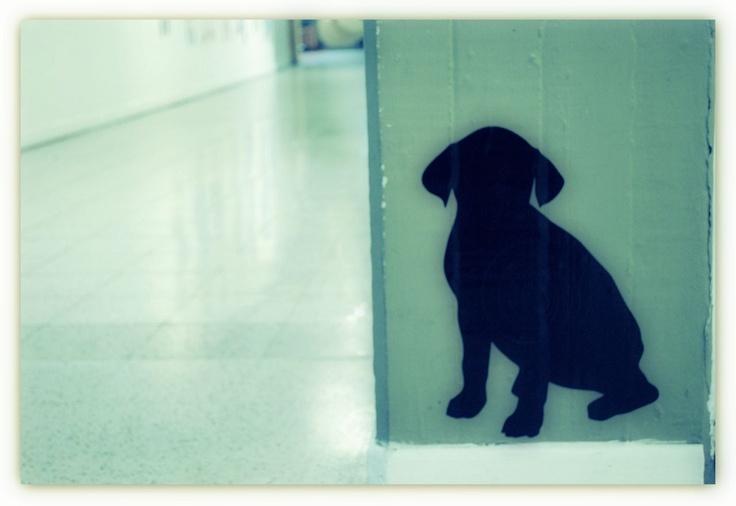 Dog, inglés, colombo americano, cotidianidad, diseño