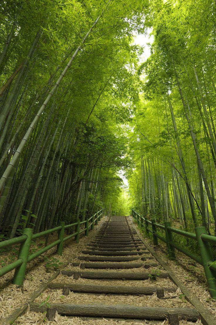 Bamboo Path - Makinogaike Greens, Nagoya, Aichi, Japan