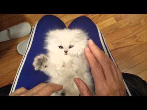 The Internet Needs more Fluffy Kittens That Are Ticklish