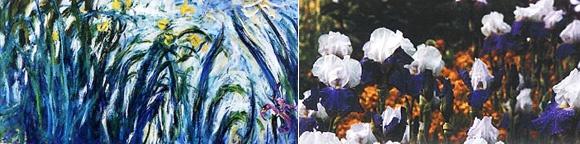 """""""Iris jaunes et mauves""""  1924-1925 - Huile sur toile 106x155 cm - © Musée Marmottan Monet, Paris"""