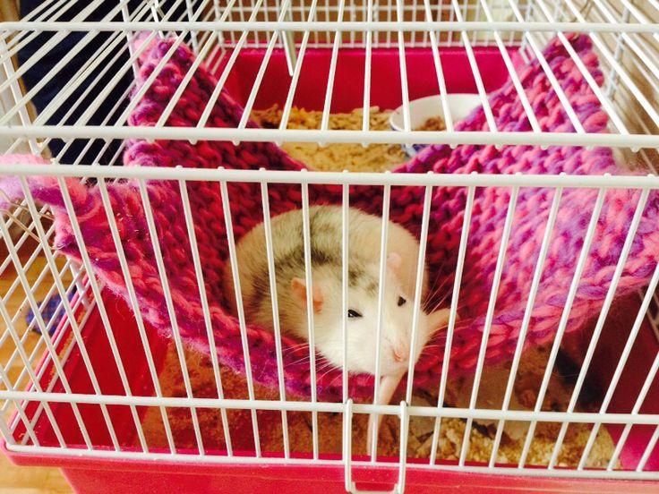 Rat hammock 2
