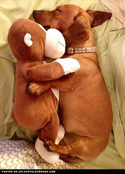 Such a sweet pair!: Stuffed Toys, Puppies, Weenie Dogs, Pet, Cuddling Buddy, Weiner Dogs, Wiener Dogs, Stuffed Animal, Sweet Dreams