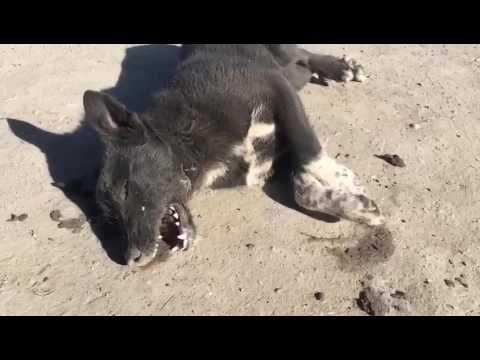 Жители Заводского района просят найти виновных в массовом убийстве собак      #Саратов #СаратовLife