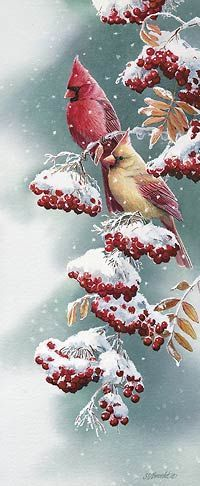 Scarlet and Snow-Cardinals by Susan Bourdet | Wild Wings: