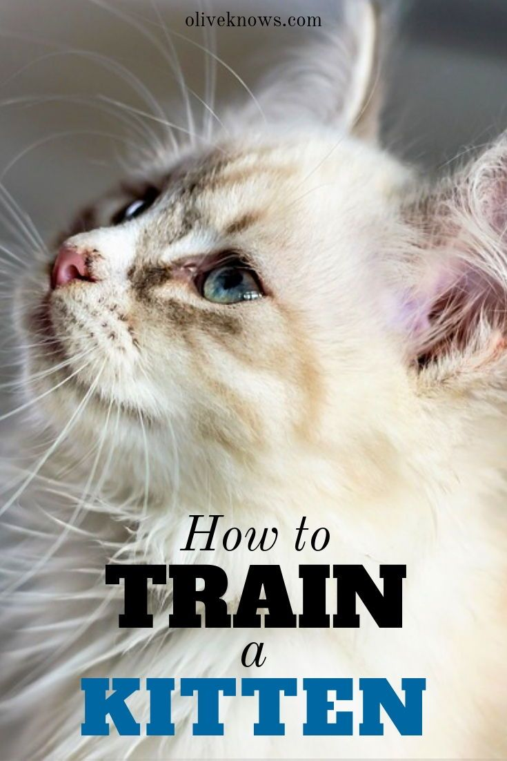How To Train A Kitten Oliveknows Training A Kitten Cat Training Cat Parenting