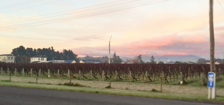 Nga Waka's Old Cemetery Block on a frosty morning in Martinborough.