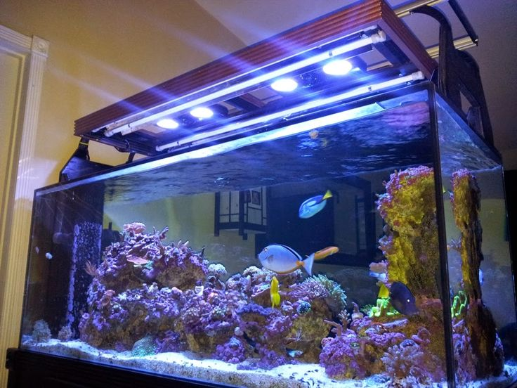 Marine Depot Blog: My DIY Hood for T5 & Radion LED Lighting